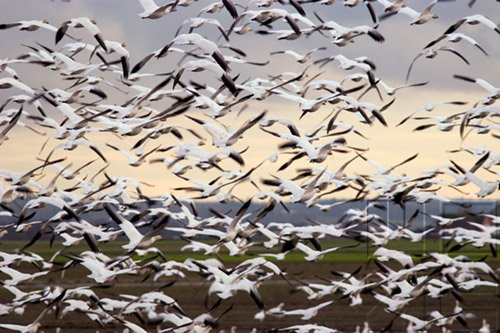 Bird Behavior - Migration