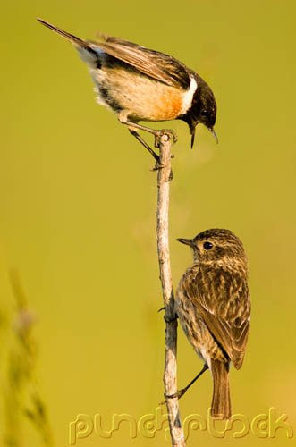 Bird Behavior - Communication