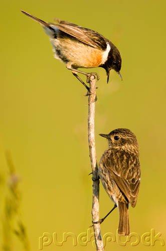 Bird Behavior - Communication