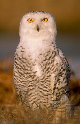 Bird Behavior - Senses & Intelligence