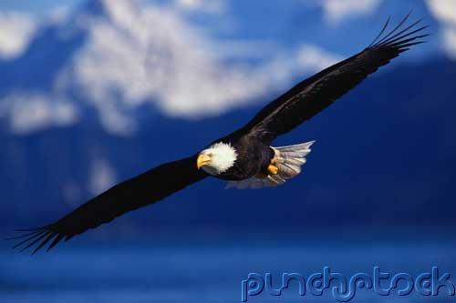 Bird Behavior - Flight