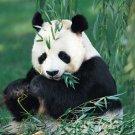 Animal Kingdom - Finding Food