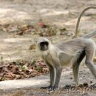 Primates Of The World: Primate Conservation - Part V