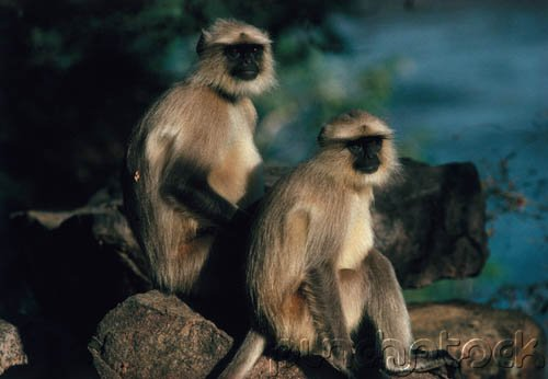 Primates Of The World - Primate Intelligence - Part IV