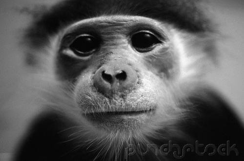 Primates of The World - Primate Social Behavior - Part III