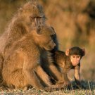 Primates Of The World - Primates In General - Part II