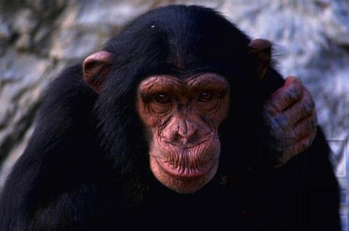 Primates Of The World: Primates - Part I