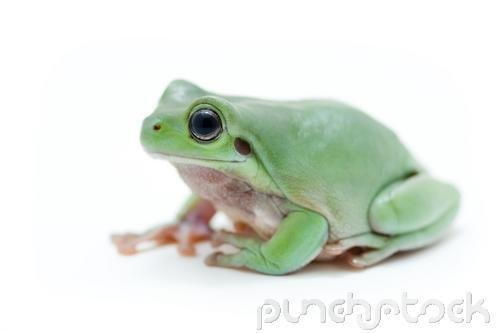 Frogs - All About Frogs