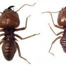 Termites - A Natural History  Of Termites