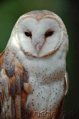 Owls of the World - Their Lives - Behavior & Survival