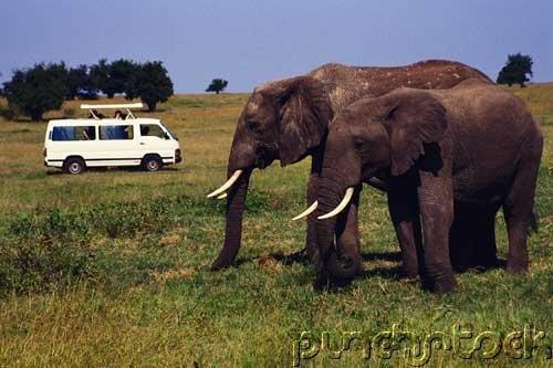 Elephants- The Astonishing Elephant - Part III