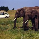 Elephants- The Astonishing Elephant - Part III