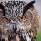 Raptors - Eagles - Hawks - Falcons & Vultures - Part II