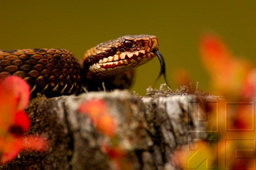 Snakes - Evaluation Of Mystery In Nature Synthesis - Part III