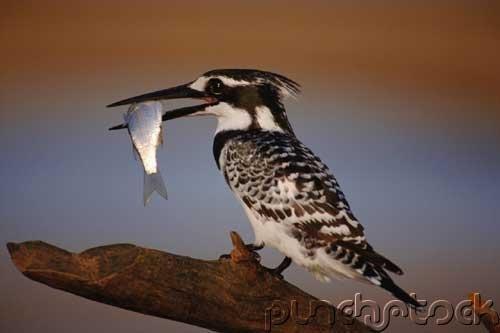 Bird Behavior - Diet & Way of Life