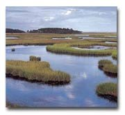 Curriculum Design & Instruction To Teach About Wetlands