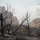 Deforestation & Species Decimation