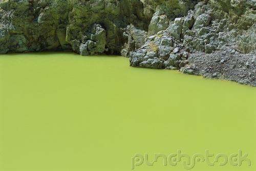 Diversity - Heterotrophic Protista - Water Molds & Slime Molds