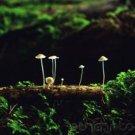 Diversity - The Fungi