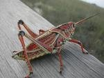 Bugs & Insects - The Natural World Of Bugs & Insects