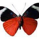 Butterflies - A Natural History Of Butterflies
