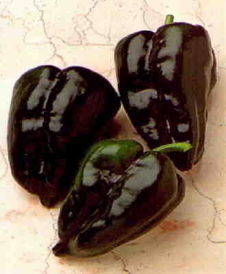 Ancho San Luis hot pepper seeds