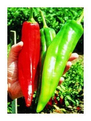 Big Chile hot pepper seeds