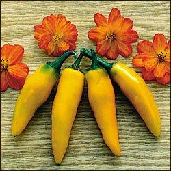 Bulgarian Carrot hot pepper seeds