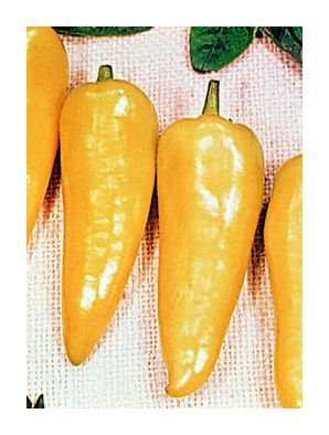Romanian Hot hot stuffing pepper seeds
