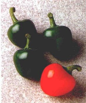 HOT RED CHERRY PEPPER SEEDS