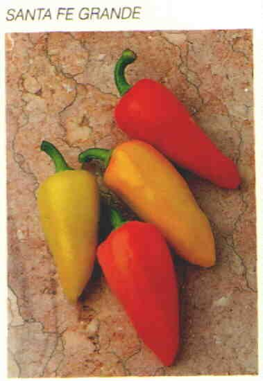 SANTA FE GRANDE HOT PEPPER SEEDS