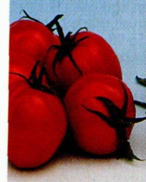Bellstar roma tomato seeds