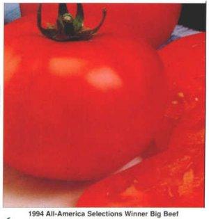 Big Beef, early beefsteak tomato seeds