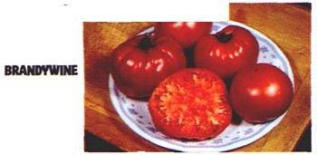 Brandywine, amish heirloom tomato seeds