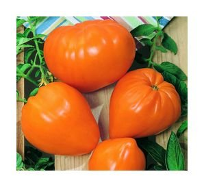 Orange Strawberry, oxheart tomato seeds