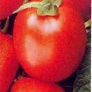 Health Kick tomato seeds, high lycopine