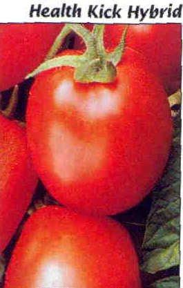 Health Kick tomato seeds, high lycopine