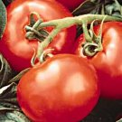 Heatwave II tomato seeds