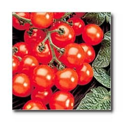 Husky Cherry Red tomato seeds
