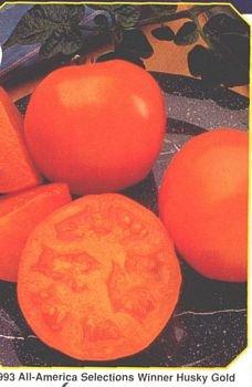 Husky Gold tomato seeds, dwarf plant