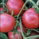 Husky Pink tomato seeds, dwarf plant