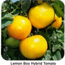 Lemon Boy heirloom yellow tomato seeds