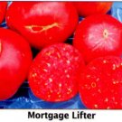 Mortgage Lifter tomato seeds, heirloom