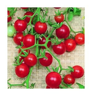 Red Currant tomato seeds, wild heirloom