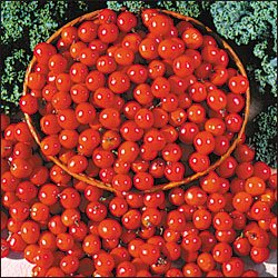 Riesentraube tomato seeds, heirloom cherry