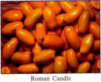 Roman Candle roma tomato seeds
