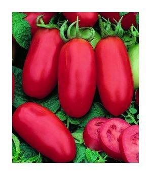 San Marzano roma tomato seeds