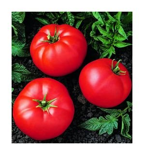 Super Bush tomato seeds, dwarf plant