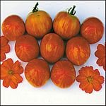Tiger Tom tomato seeds, bi-color