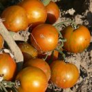 Guernsey Island cherry tomato seeds
